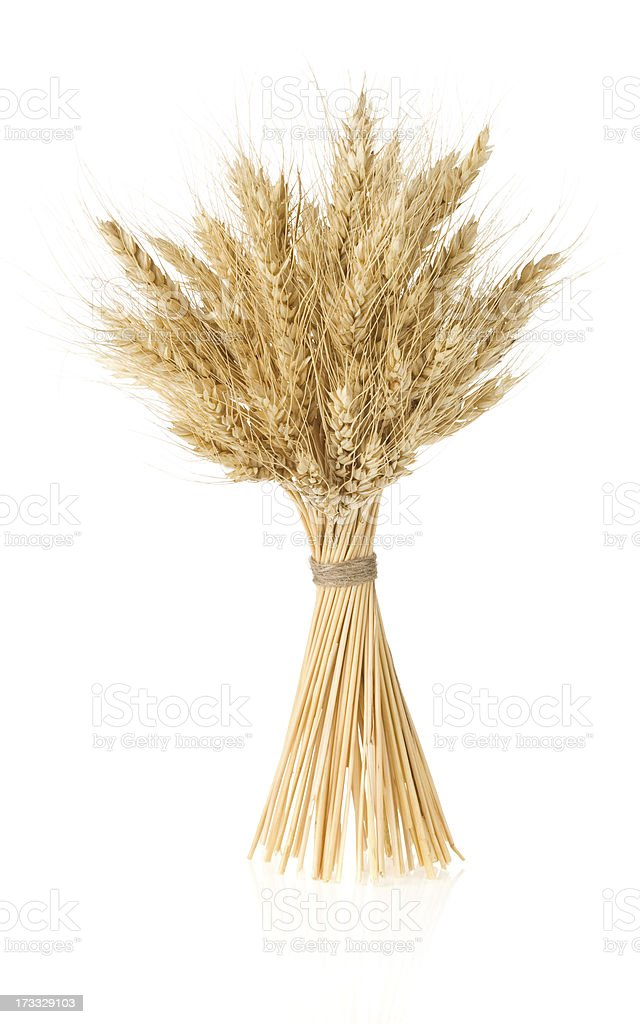 ears of barley  isolated on white royalty-free stock photo