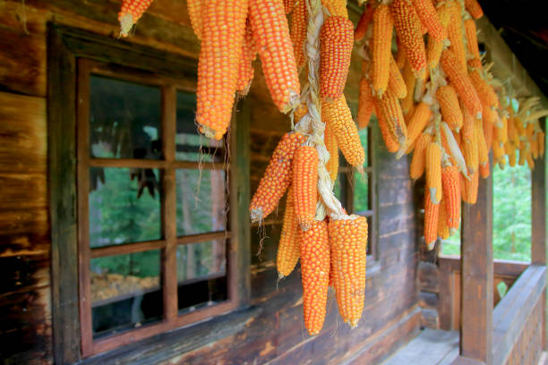 Ears of corn are dried on the porch of a village house.