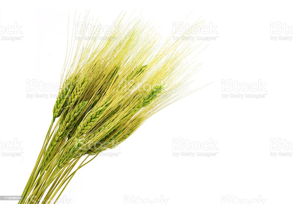 Ears of hay on a white background stock photo