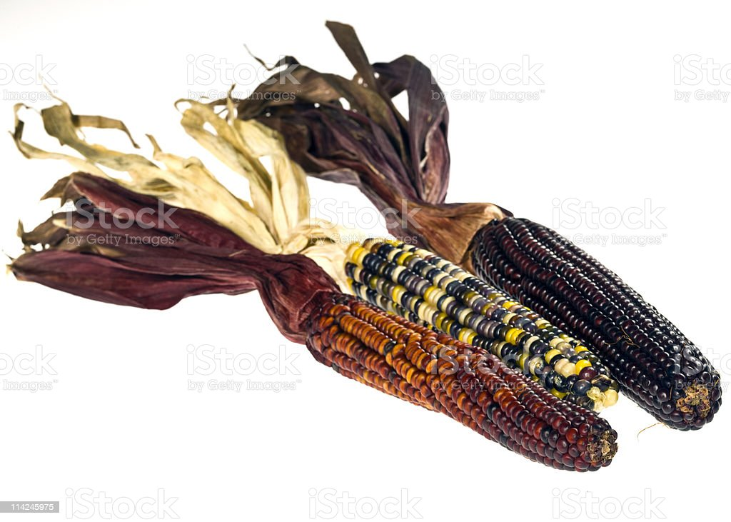 3 ears of multicolored corn on the cob royalty-free stock photo