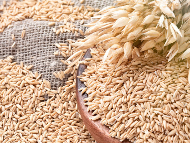 Ears of oats and oatmeal, whole grains in bowl on table. Uncooked grains for oatmeal porridge Ears of oats and oatmeal, whole grains in bowl on table. Uncooked grains for oatmeal porridge oat crop stock pictures, royalty-free photos & images