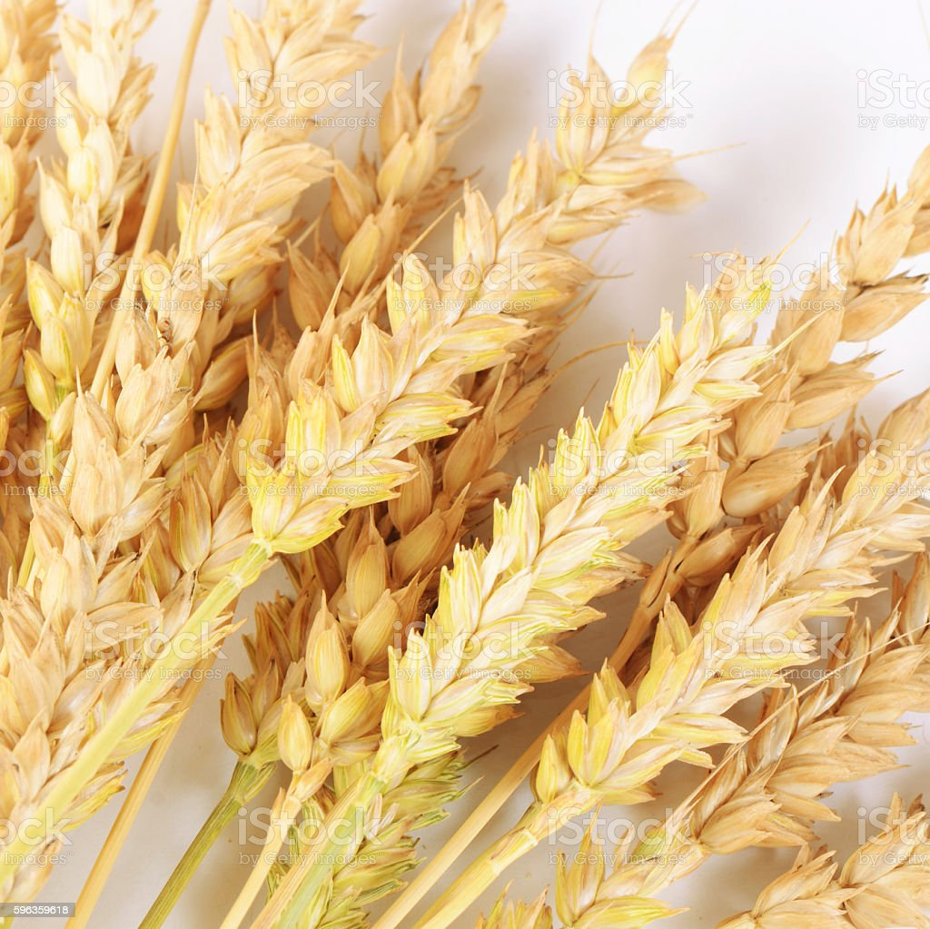 Ears of ripe wheat close up royalty-free stock photo