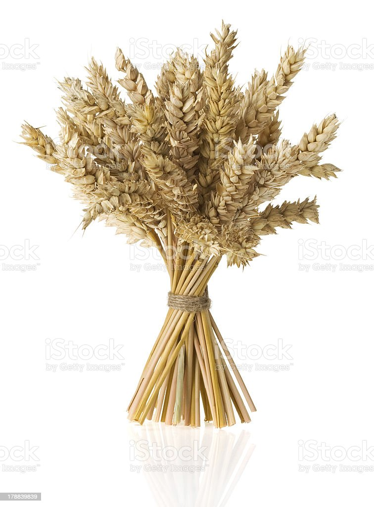 ears of wheat  isolated on white stock photo