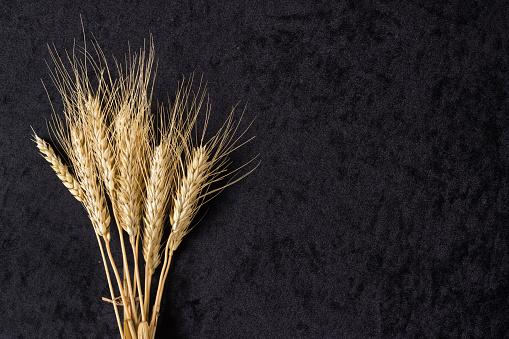 istock Ears of wheat on black 531792784