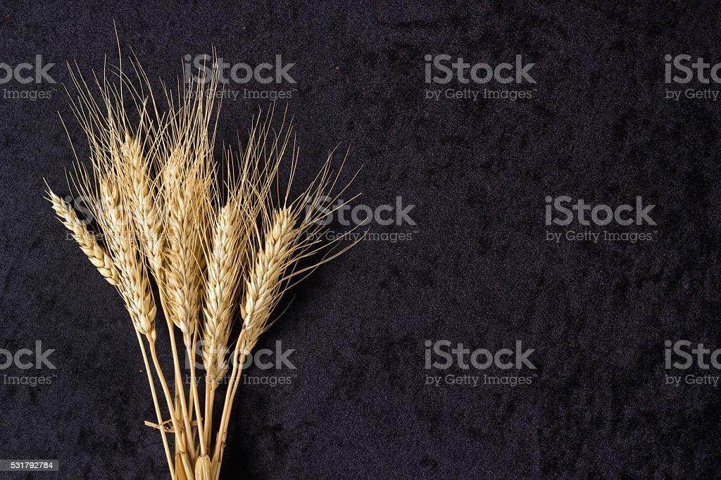 Ears of wheat on black stock photo