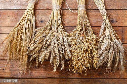 ears of wheat, rye, barley and oats on old wooden background