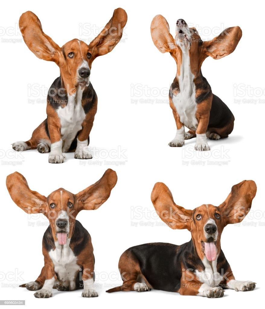Oídos. - foto de stock