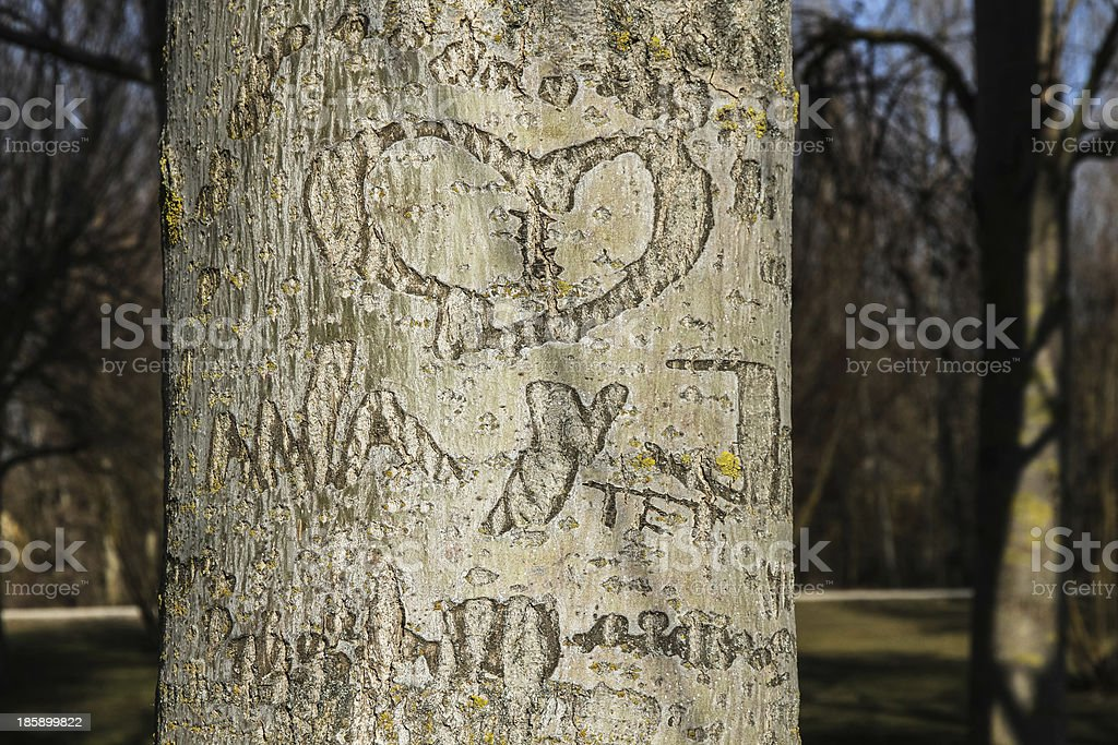 H eart with Initials Carved in Tree Trunk -  Corazon royalty-free stock photo