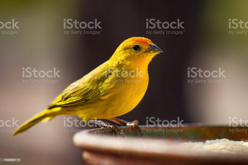 Earth Canary - Royalty-free Beschermd natuurgebied Stockfoto