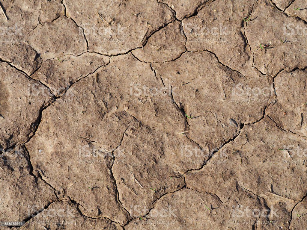 Earth. Cracked ground, lack of moisture. Green sprouts on dry soil. Top view stock photo