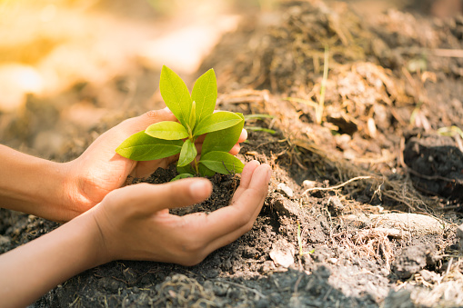 1139475964 istock photo Earth Day, a day of education about environmental issues concepts. 1131320314