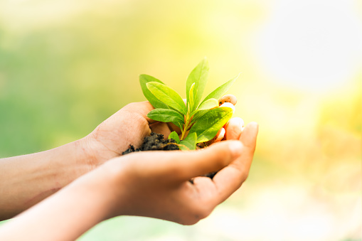1139475964 istock photo Earth Day, a day of education about environmental issues concepts. 1131320362