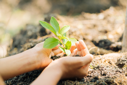 1139475964 istock photo Earth Day, a day of education about environmental issues concepts. 1131320363