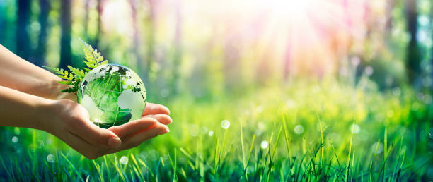 Earth Day - Environment Concept - Hands Holding Globe Glass In Green Meadow With Sunlight stock photo