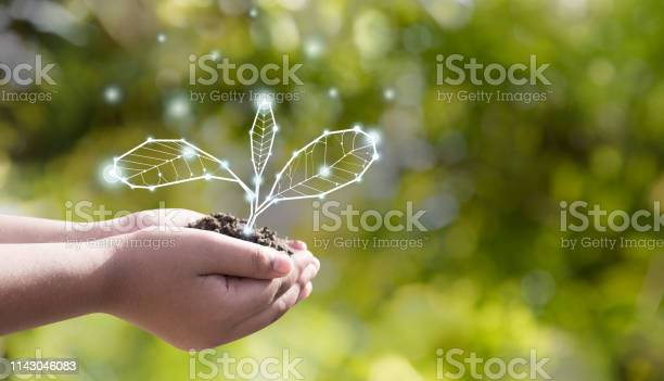 Earth day environmental protection is in the hands of a tree that is picture id1143046083?b=1&k=6&m=1143046083&s=612x612&h=wrg2cvhjl5bavq axv3alifhpcuxer0j5o3ppdhdsg8=