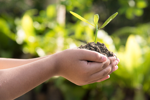 1139475964 istock photo Earth Day environmental protection is in the hands of a tree that is planted as a graphic with brown soil.Green background, bokeh, tree on the grassland, nature, forest cons.Hand holding globe 1143046090