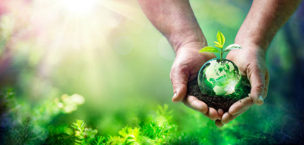 Earth Day - Growing Plant On Globe In The Green Forest - Environment Concept stock photo