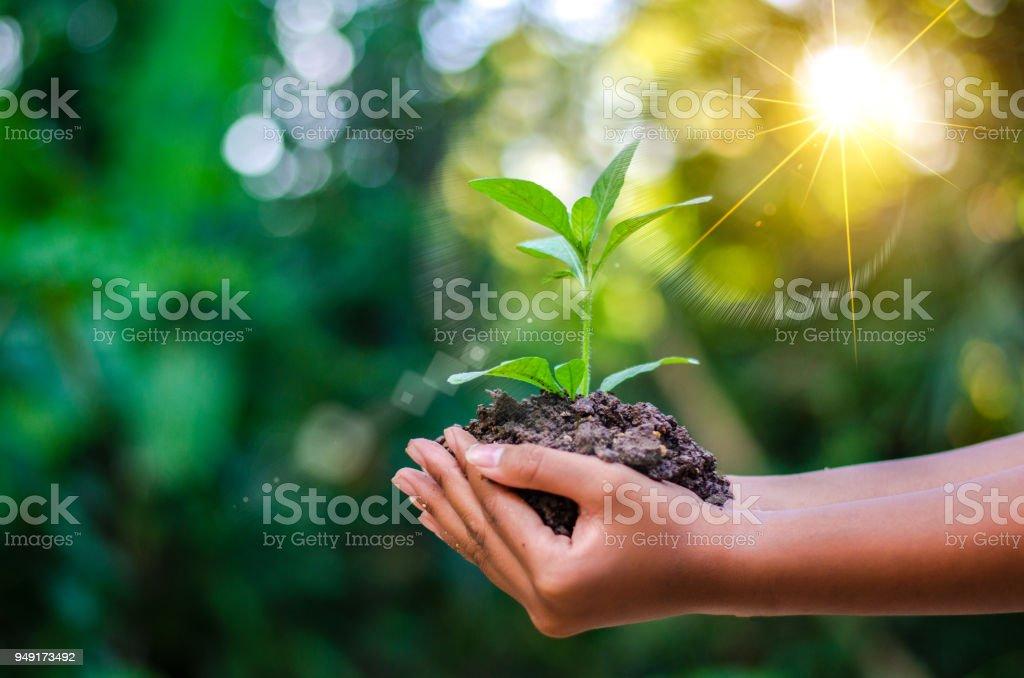 地球日在樹的手中種植幼苗。散景綠色背景女性手捧樹在自然場草林保護觀中的研究 - 免版稅一個人圖庫照片