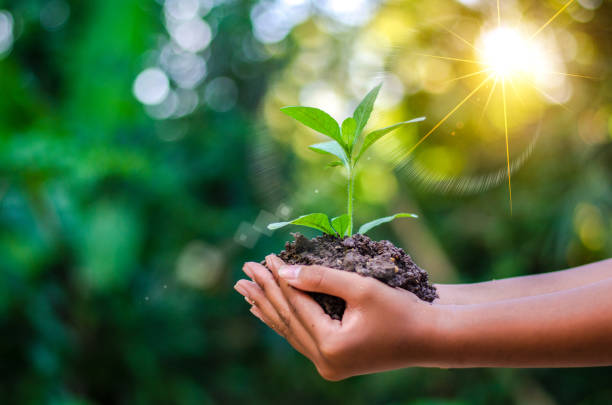 earth day in the hands of trees growing seedlings. bokeh green background female hand holding tree on nature field grass forest conservation concept - sustainable living stock pictures, royalty-free photos & images