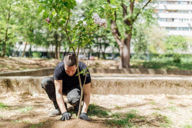 dünya günü, ağaçları dikmek - diken bitki niteliği stok fotoğraflar ve resimler