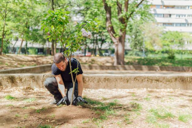 Earth Day, planting the trees stock photo