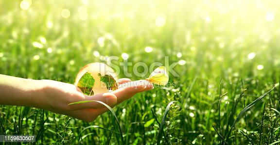 istock Earth glass globe and butterfly in human hand on green grass background. Saving environment concept. 1159630507