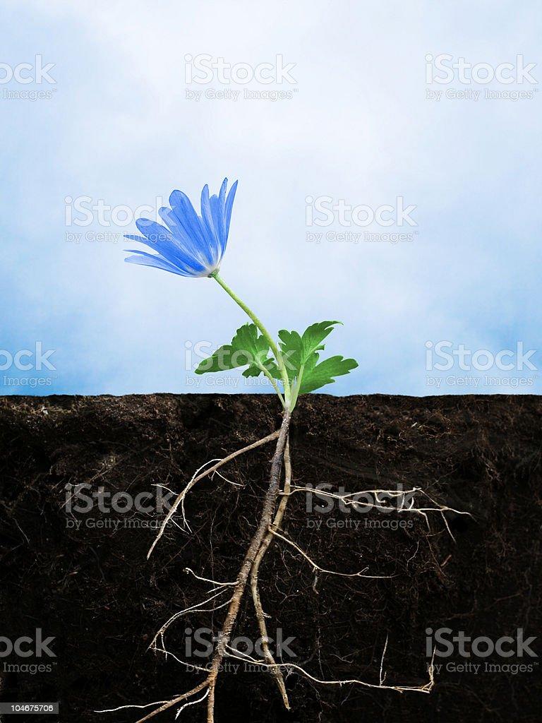 Earth growing flower stock photo