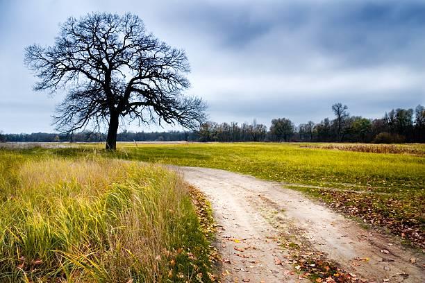 Erde road – Foto
