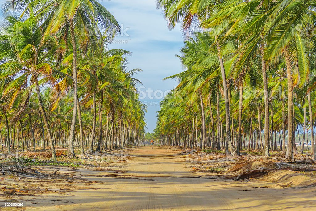 Earth Topical Road Porto Galinhas Brazil stock photo