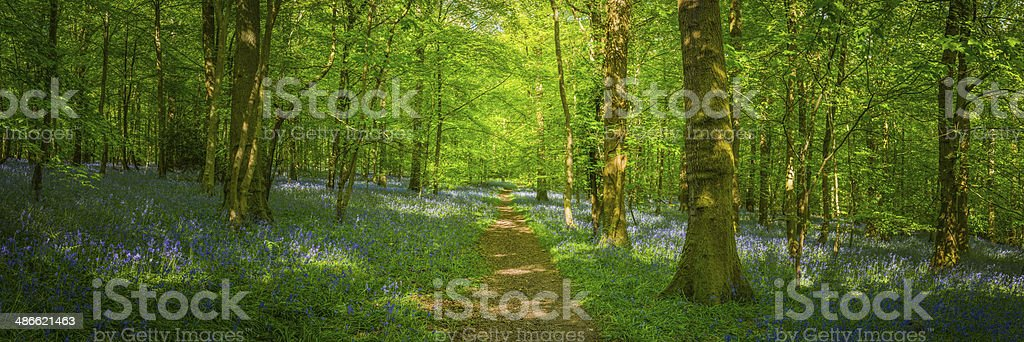 Earth trail through idyllic fairytale forest wildflower woodland summer panorama stock photo