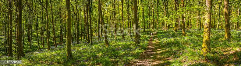 Summer sunlight filtering through the green foliage of an tranquil forest clearing to illuminate the wildflowers, fern fronds and bluebells in this idyllic woodland glade.