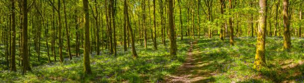 Erdwanderweg durch idyllisches grün-grünes Waldlaub Wildniswaldpanorama – Foto