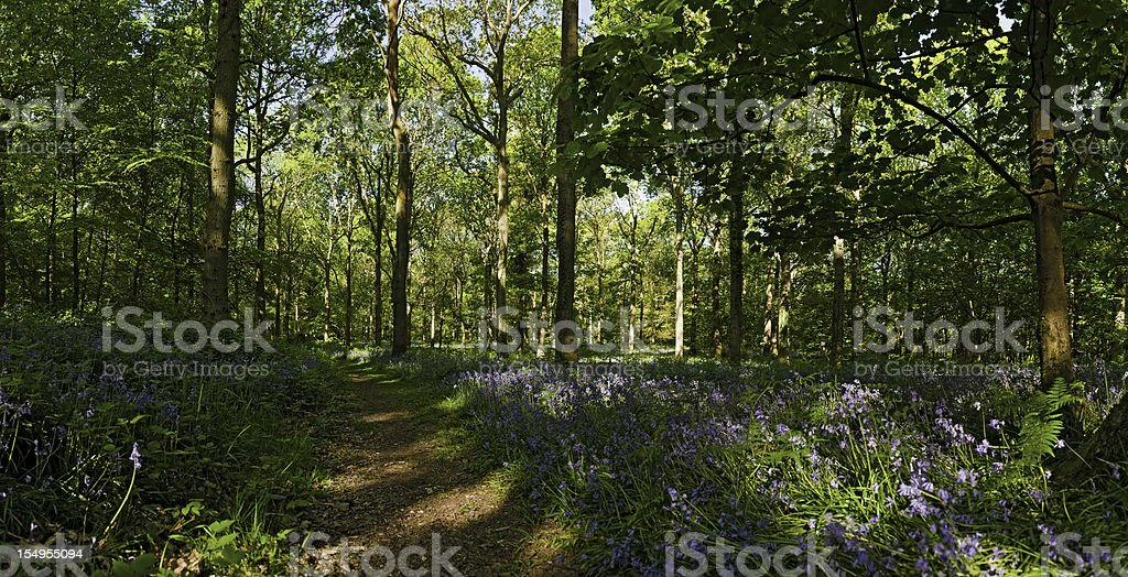 Earth trail through idyllic summer forest wildflower woods bluebells panorama royalty-free stock photo