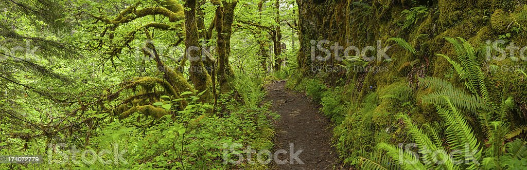 Earth trail through lush green rainforest wilderness panorama stock photo