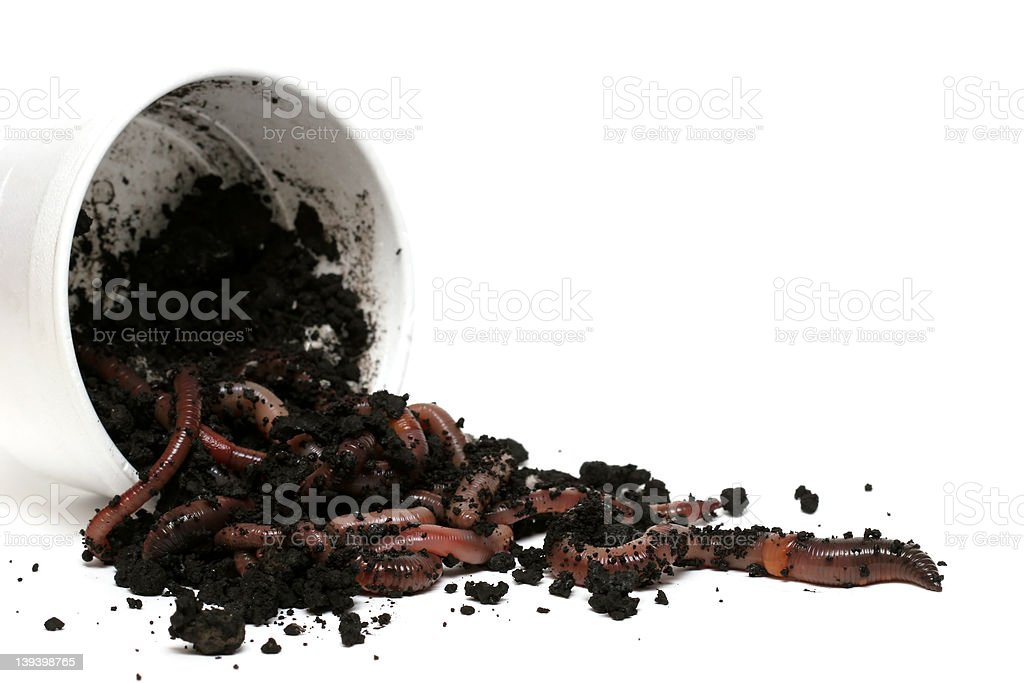 earth worms - the great escape stock photo