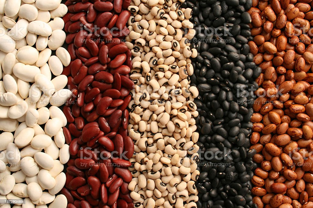 Earthly beans stock photo