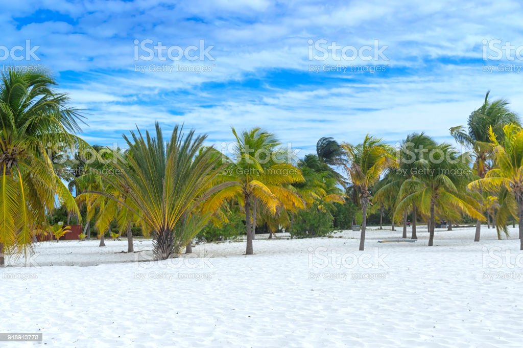 Earthly paradise, palm trees sun and sand near the sea stock photo