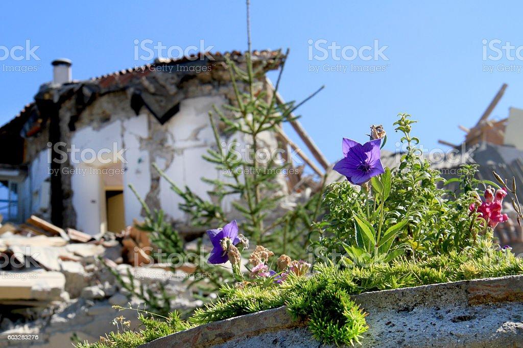 Earthquake in Amatrice stock photo