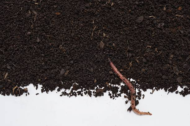 Earthworm humus soil with its Earthworm humus photographed over her, excellent natural fertilizer. annelid stock pictures, royalty-free photos & images