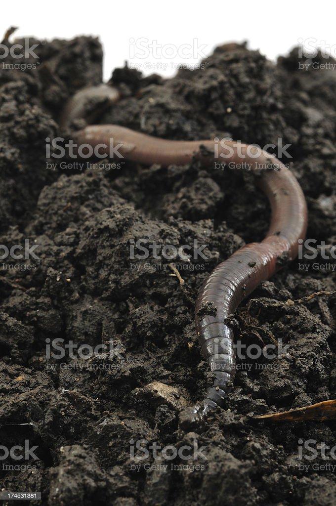 Earthworm on Soil stock photo