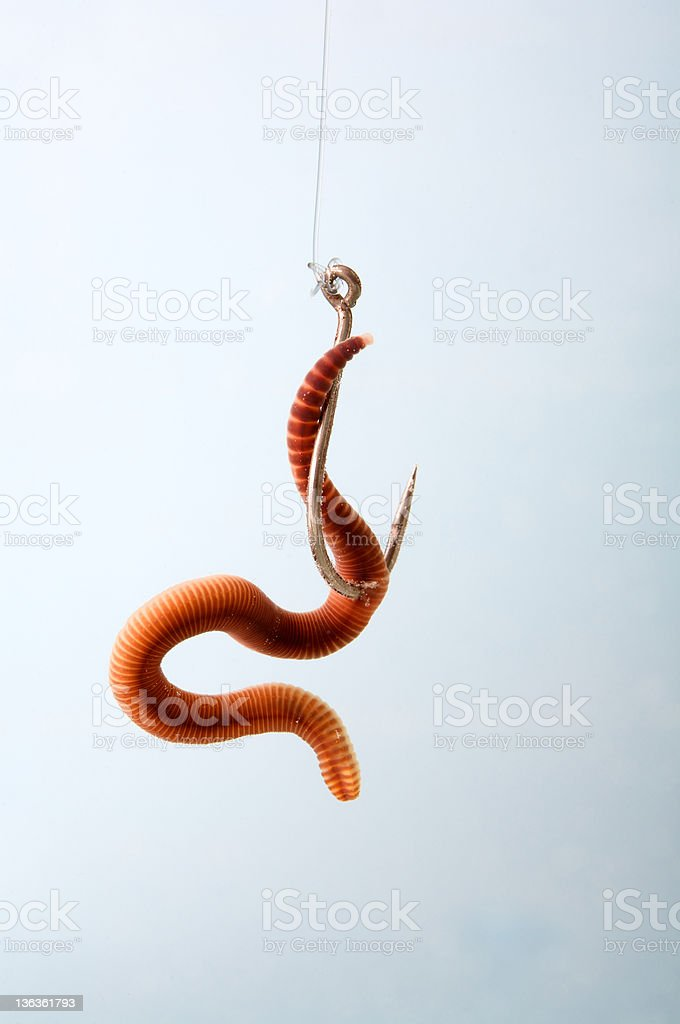 Earthworm royalty-free stock photo