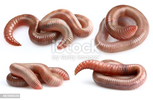 my other earthworms pictures: