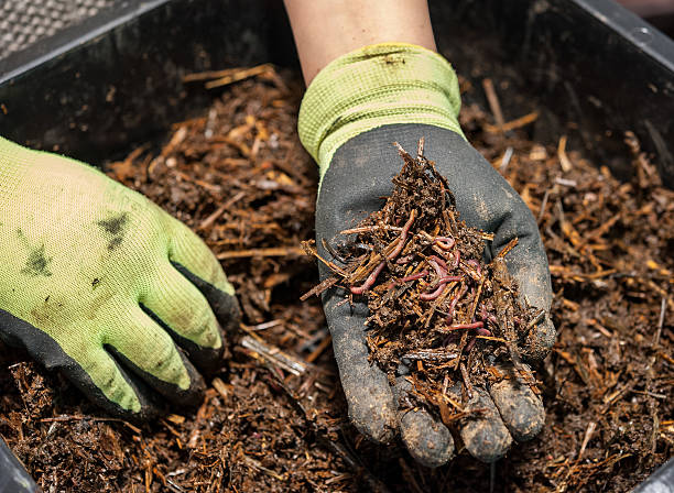 Earthworms The worm composting is a great fertilizer worm stock pictures, royalty-free photos & images