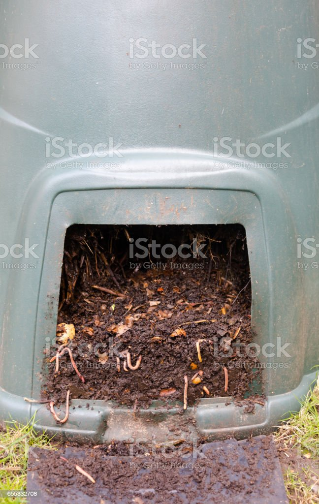 Eartworms in natural compost in plastic green barrel stock photo