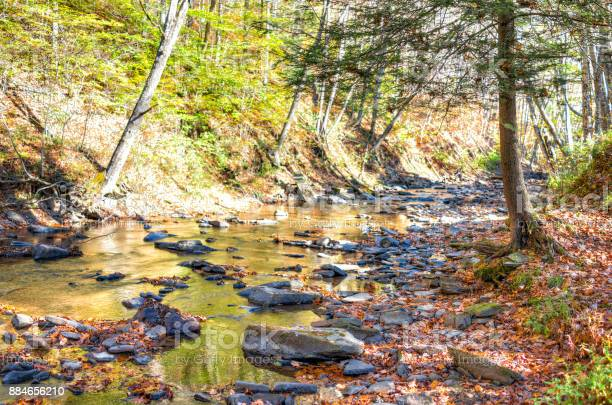 Photo of East Fork Greenbrier River creek in West Virginia during colorful autumn with many rocks and fallen leaves by forest in Island Campground