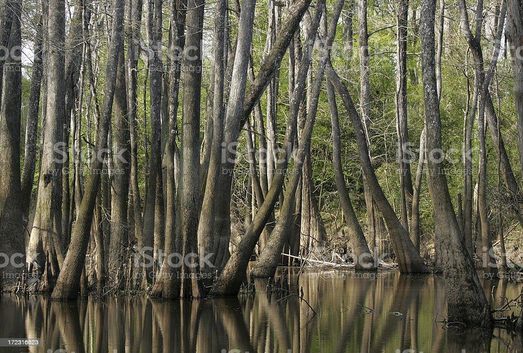 east texas swamp 2 stock photo