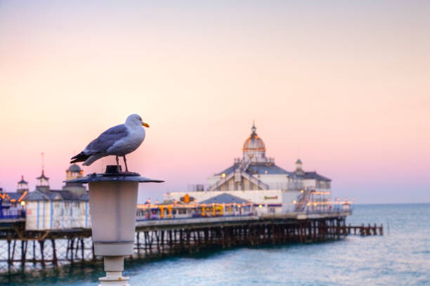 Eastbourne Pier and Seagull stock photo