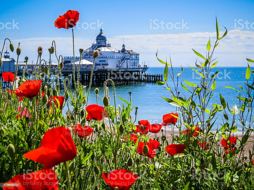 Eastbourne's pier and poppies on the seashore stock photo