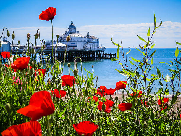 eastbourne's pier and poppies on the seashore - east sussex stockfoto's en -beelden