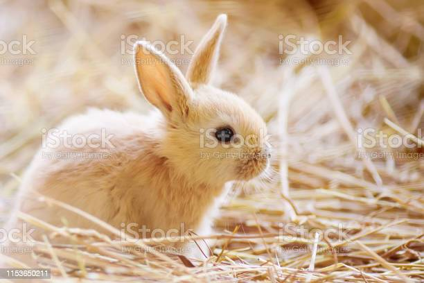 Easter adorable little rabbit picture id1153650211?b=1&k=6&m=1153650211&s=612x612&h=nbacshy gq q yrrkx9abd4txj5hc7qcbsequgapcby=
